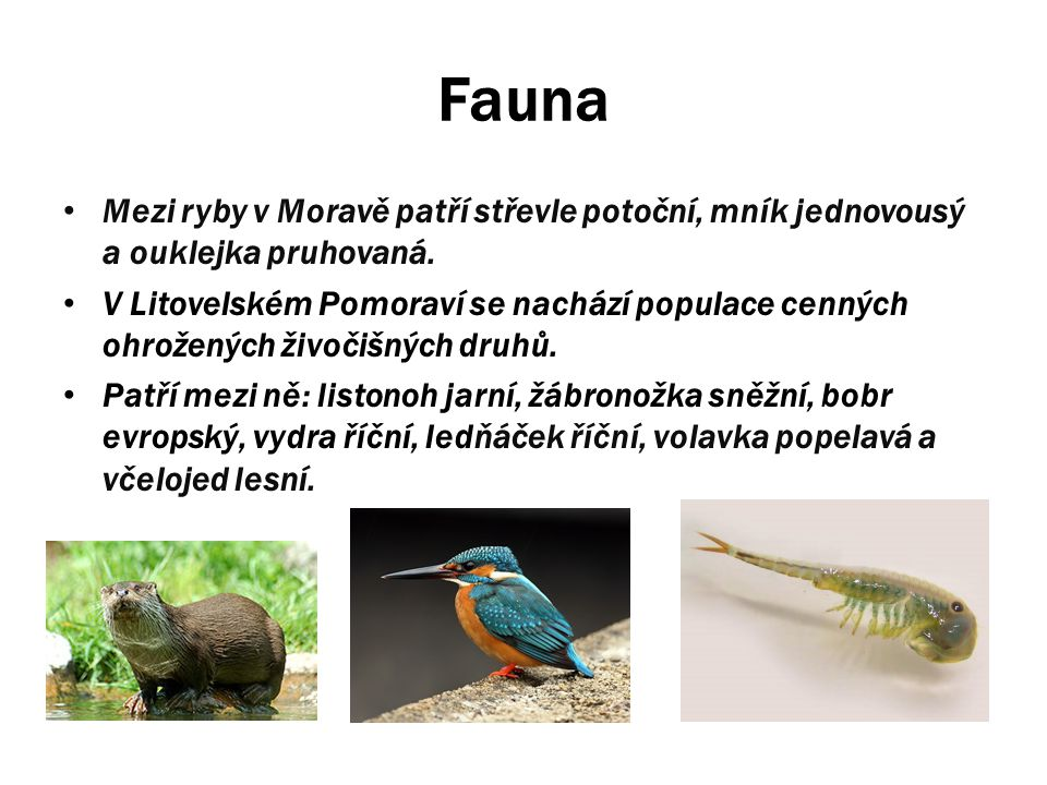 Fauna Mezi ryby v Moravě patří střevle potoční, mník jednovousý a ouklejka pruhovaná. V Litovelském Pomoraví se nachází populace cenných ohrožených ži