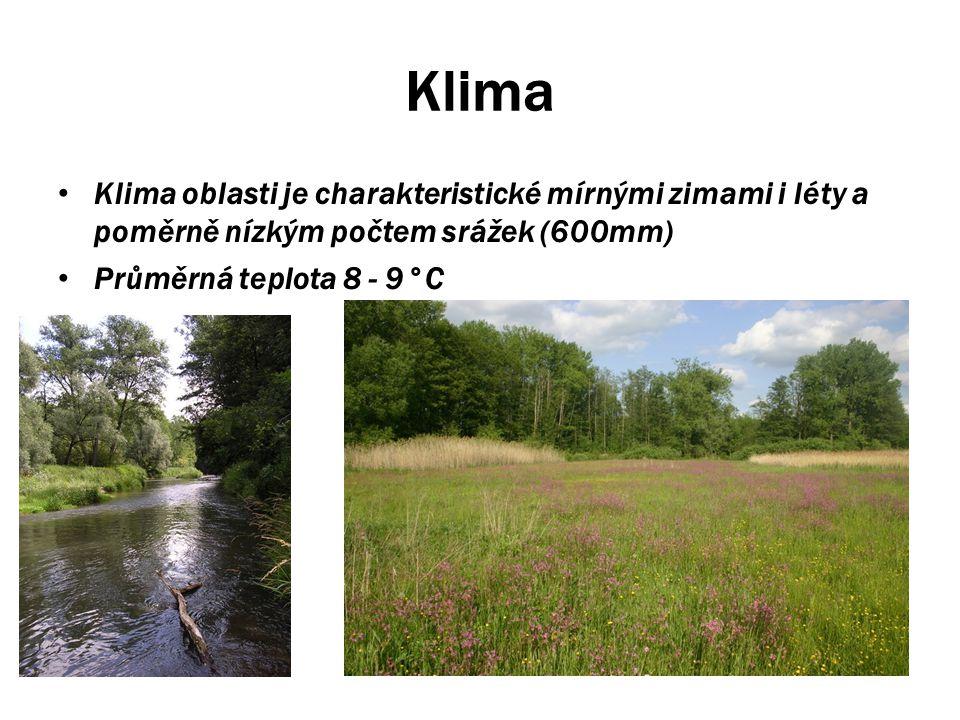 Lužní lesy Lužní lesy jsou hlavní předmět ochrany Litovelského pomoraví.