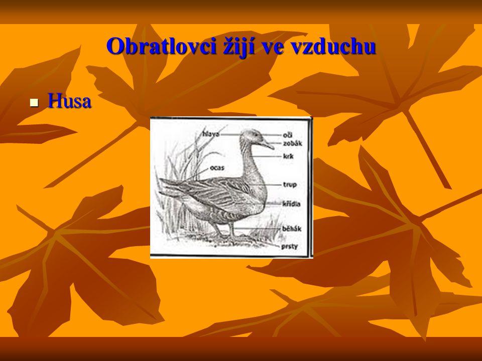 Křížovka 1) Drobné organismy rostlinného a živočišného původu(ve vodě).