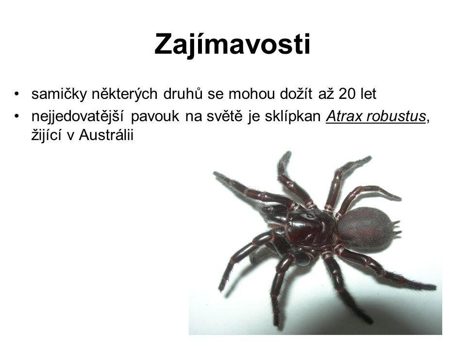 Zajímavosti samičky některých druhů se mohou dožít až 20 let nejjedovatější pavouk na světě je sklípkan Atrax robustus, žijící v Austrálii