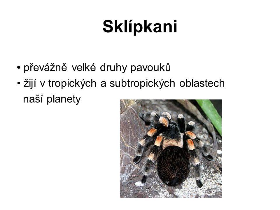 Sklípkani převážně velké druhy pavouků žijí v tropických a subtropických oblastech naší planety