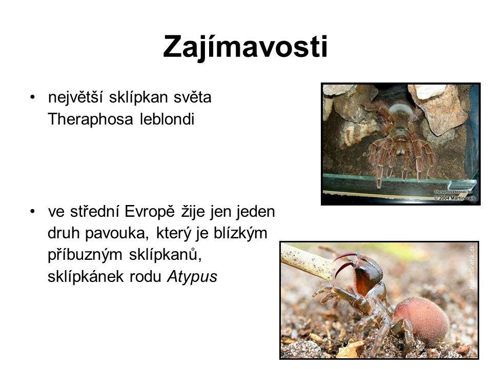 Zajímavosti největší sklípkan světa Theraphosa leblondi ve střední Evropě žije jen jeden druh pavouka, který je blízkým příbuzným sklípkanů, sklípkáne