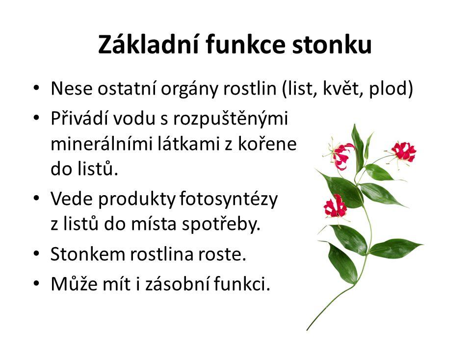 Základní funkce stonku Nese ostatní orgány rostlin (list, květ, plod) Přivádí vodu s rozpuštěnými minerálními látkami z kořene do listů. Vede produkty