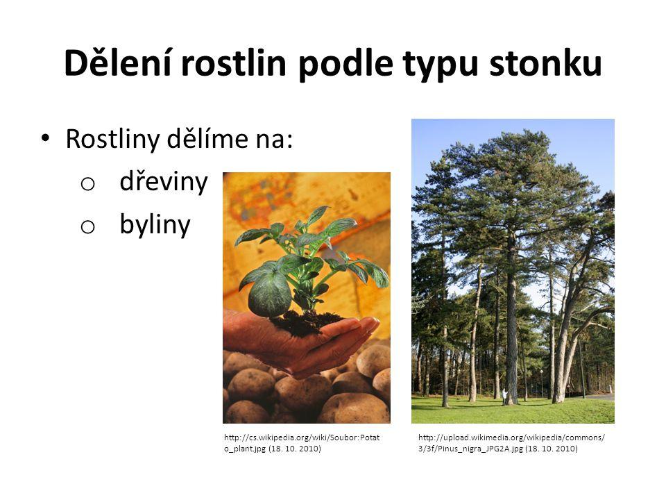 Dělení rostlin podle typu stonku Rostliny dělíme na: o dřeviny o byliny http://cs.wikipedia.org/wiki/Soubor:Potat o_plant.jpg (18. 10. 2010) http://up