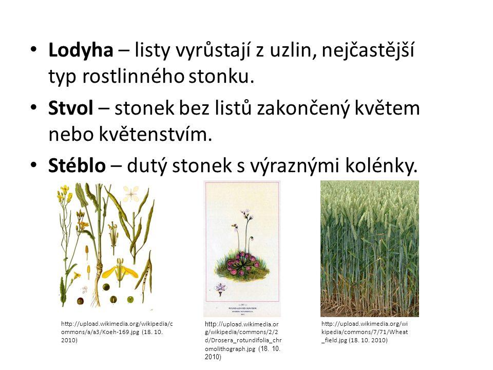 Lodyha – listy vyrůstají z uzlin, nejčastější typ rostlinného stonku. Stvol – stonek bez listů zakončený květem nebo květenstvím. Stéblo – dutý stonek
