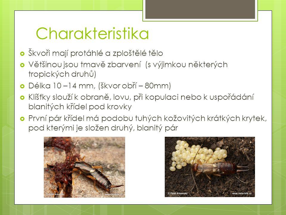 Charakteristika  Škvoři mají protáhlé a zploštělé tělo  Většinou jsou tmavě zbarvení (s výjimkou některých tropických druhů)  Délka 10 –14 mm, (škv