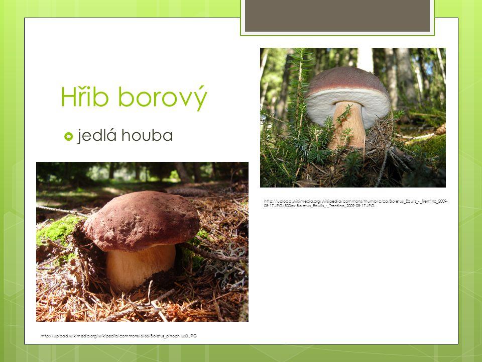 Hřib borový  jedlá houba http://upload.wikimedia.org/wikipedia/commons/6/66/Boletus_pinophilus3.JPG http://upload.wikimedia.org/wikipedia/commons/thu