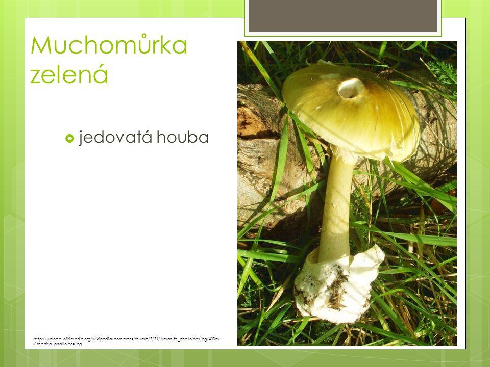 Muchomůrka zelená  jedovatá houba http://upload.wikimedia.org/wikipedia/commons/thumb/7/71/Amanita_phalloides.jpg/430px- Amanita_phalloides.jpg