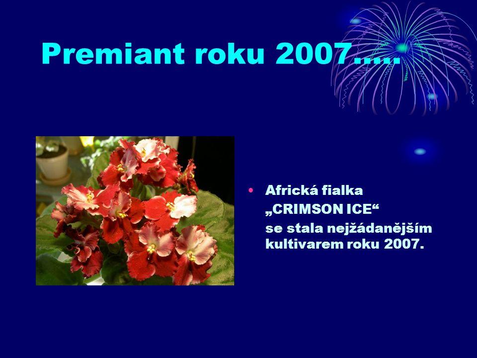 """Premiant roku 2007….. Africká fialka """"CRIMSON ICE"""" se stala nejžádanějším kultivarem roku 2007."""