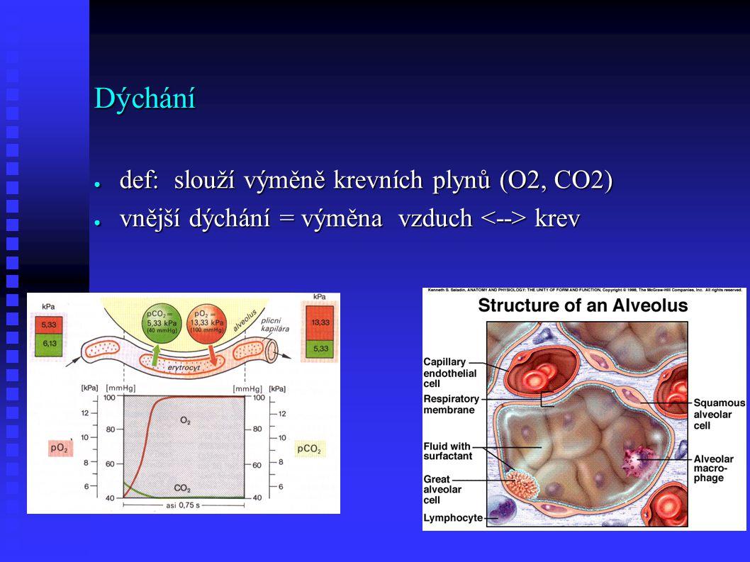 Dýchání ● def: slouží výměně krevních plynů (O2, CO2) ● vnější dýchání = výměna vzduch krev