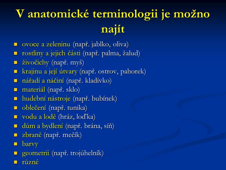 V anatomické terminologii je možno najít ovoce a zeleninu (např.