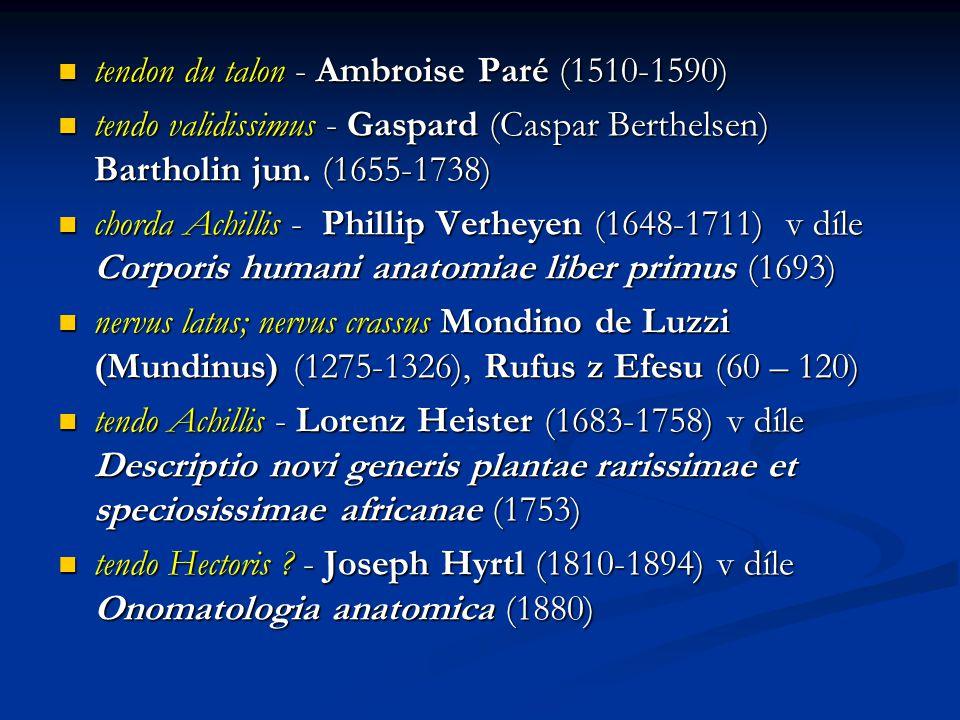 tendon du talon - Ambroise Paré (1510-1590) tendon du talon - Ambroise Paré (1510-1590) tendo validissimus - Gaspard (Caspar Berthelsen) Bartholin jun.