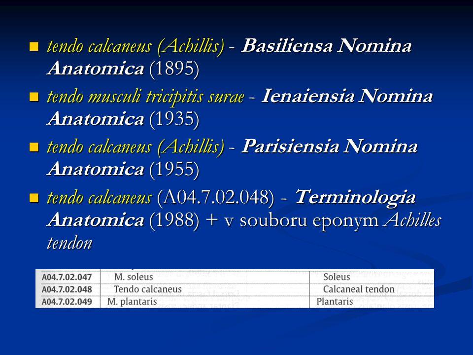tendo calcaneus (Achillis) - Basiliensa Nomina Anatomica (1895) tendo calcaneus (Achillis) - Basiliensa Nomina Anatomica (1895) tendo musculi tricipitis surae - Ienaiensia Nomina Anatomica (1935) tendo musculi tricipitis surae - Ienaiensia Nomina Anatomica (1935) tendo calcaneus (Achillis) - Parisiensia Nomina Anatomica (1955) tendo calcaneus (Achillis) - Parisiensia Nomina Anatomica (1955) tendo calcaneus (A04.7.02.048) - Terminologia Anatomica (1988) + v souboru eponym Achilles tendon tendo calcaneus (A04.7.02.048) - Terminologia Anatomica (1988) + v souboru eponym Achilles tendon