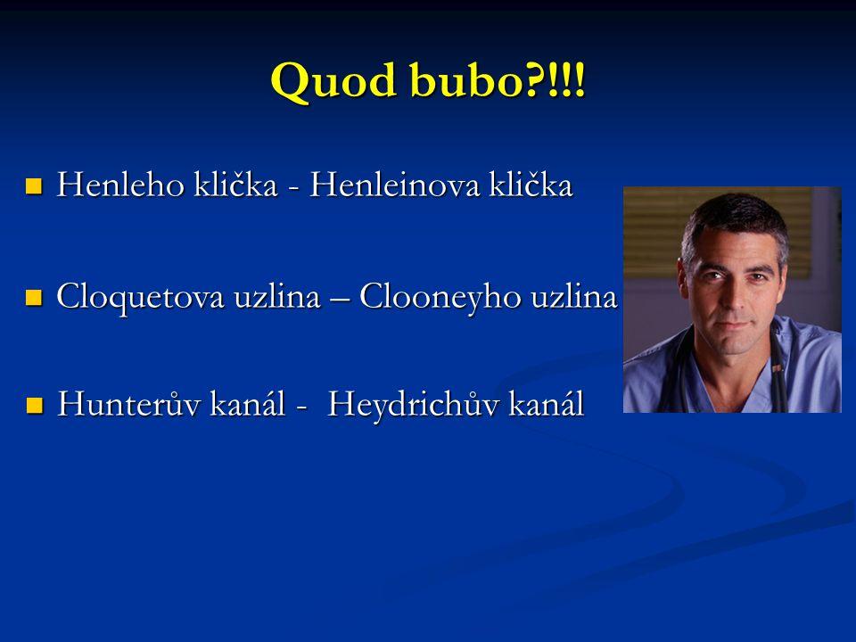Quod bubo?!!! Henleho klička - Henleinova klička Henleho klička - Henleinova klička Cloquetova uzlina – Clooneyho uzlina Cloquetova uzlina – Clooneyho