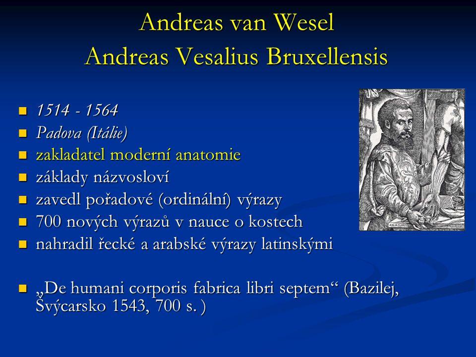 """Andreas van Wesel Andreas Vesalius Bruxellensis 1514 - 1564 1514 - 1564 Padova (Itálie) Padova (Itálie) zakladatel moderní anatomie zakladatel moderní anatomie základy názvosloví základy názvosloví zavedl pořadové (ordinální) výrazy zavedl pořadové (ordinální) výrazy 700 nových výrazů v nauce o kostech 700 nových výrazů v nauce o kostech nahradil řecké a arabské výrazy latinskými nahradil řecké a arabské výrazy latinskými """"De humani corporis fabrica libri septem (Bazilej, Švýcarsko 1543, 700 s."""