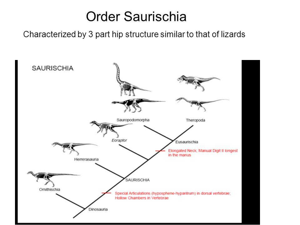 Další velkou skupinou dinosaurů, která se od ostatních skupin výrazně lišila stavbou pánve jsou Ornithischia, čili ptakopánevní dinosauři.