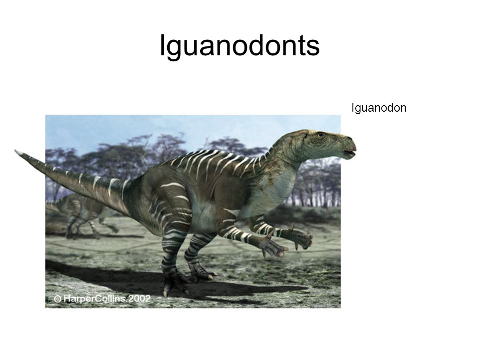 Ornitopoda