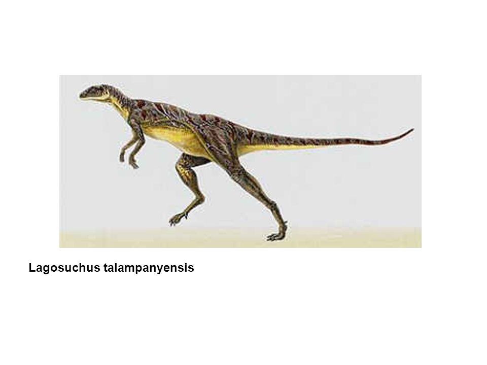 Evidence for endothermic dinosaurs Dinosaurs had big brains, and endotherms tend to have big brains (but not always, and brain size is correlated with other things, too).