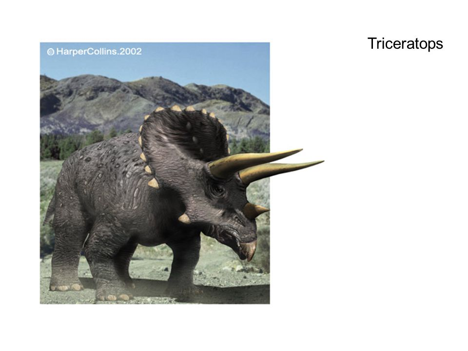 Types of Ceratopsia Torosaurus