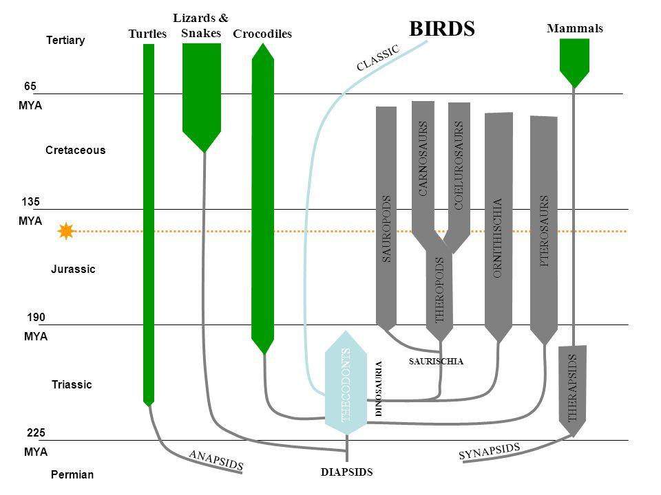 Historie ptáků (Aves) začíná během jury (všechny starší údaje se ukázaly jako neopodstatněné).