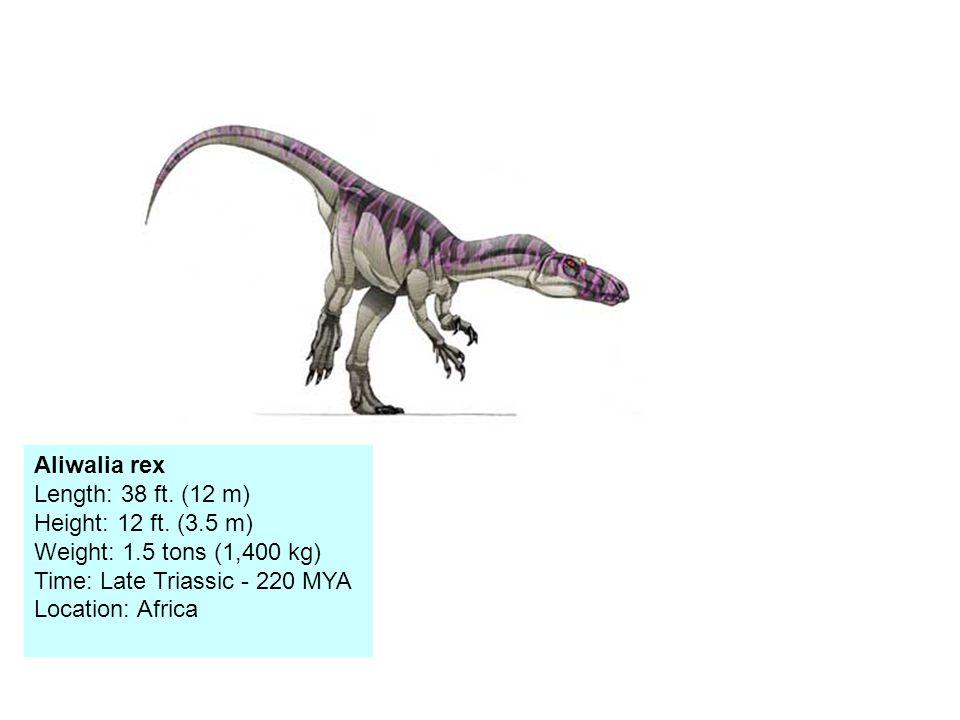 Aliwalia rex Length: 38 ft.(12 m) Height: 12 ft.