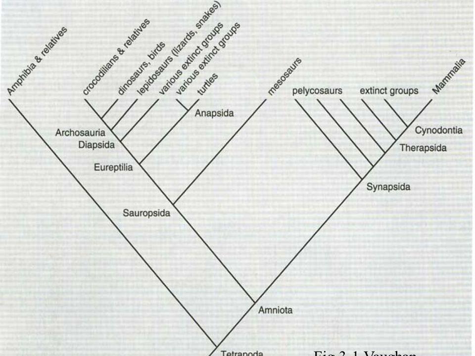 Mammalian- reptilian line
