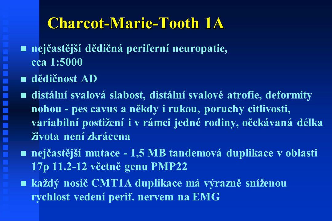 Charcot-Marie-Tooth 1A n n nejčastější dědičná periferní neuropatie, cca 1:5000 n n dědičnost AD n n distální svalová slabost, distální svalové atrofie, deformity nohou - pes cavus a někdy i rukou, poruchy citlivosti, variabilní postižení i v rámci jedné rodiny, očekávaná délka života není zkrácena n n nejčastější mutace - 1,5 MB tandemová duplikace v oblasti 17p 11.2-12 včetně genu PMP22 n n každý nosič CMT1A duplikace má výrazně sníženou rychlost vedení perif.
