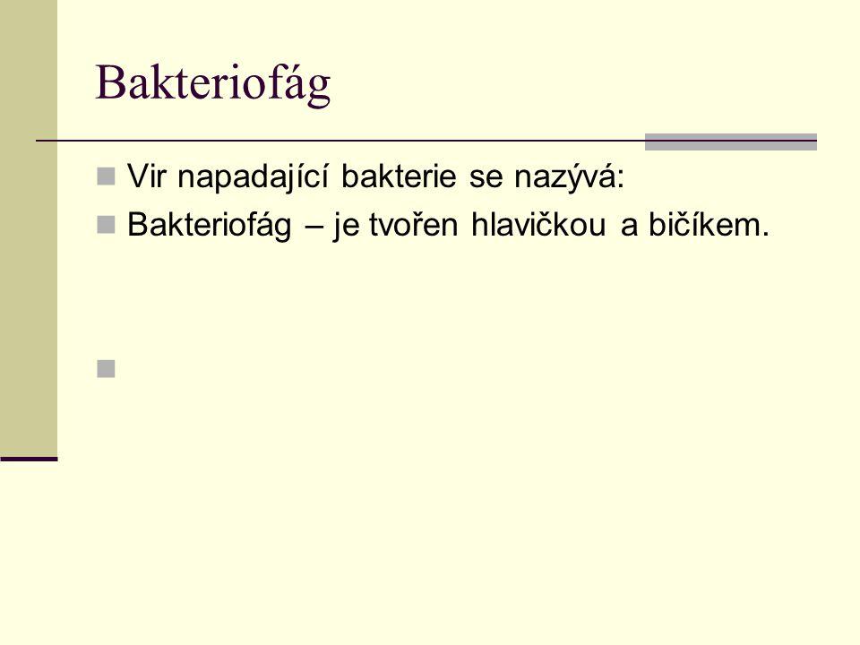 Bakteriofág Vir napadající bakterie se nazývá: Bakteriofág – je tvořen hlavičkou a bičíkem.