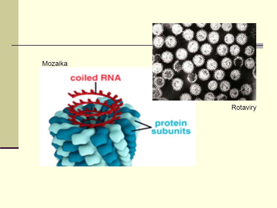 Otázky a odpovědi 1.Mezi jaké organismy patří viry.