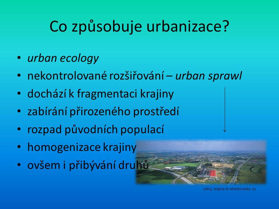 Co způsobuje urbanizace.
