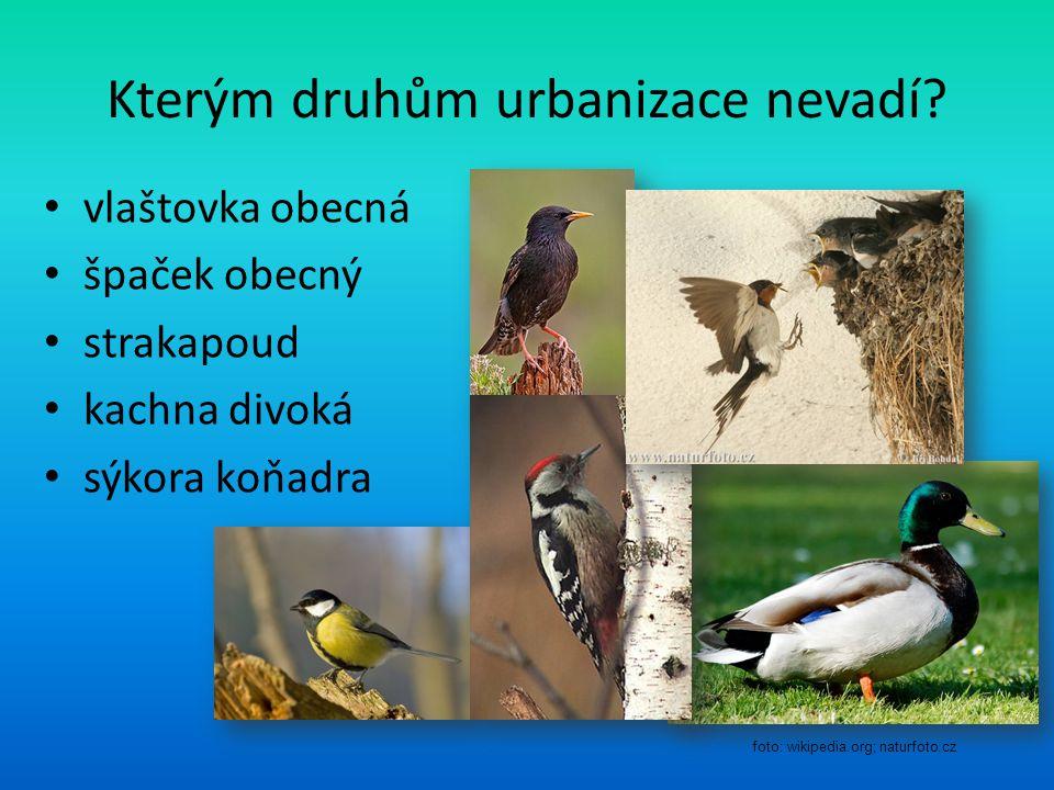 Kterým druhům urbanizace nevadí.