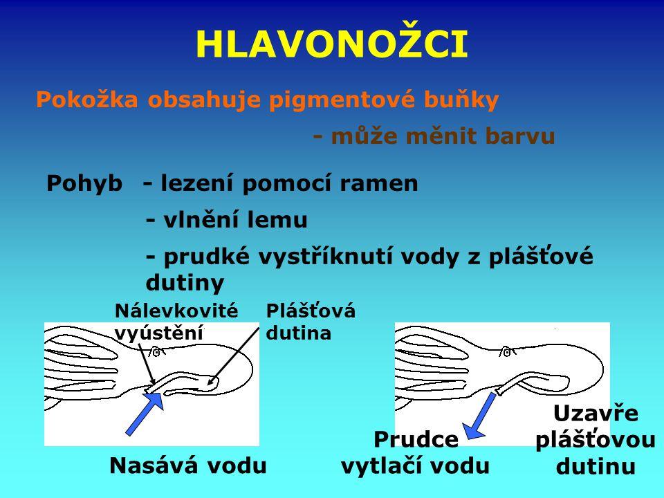 HLAVONOŽCI Pokožka obsahuje pigmentové buňky - může měnit barvu Plášťová dutina - lezení pomocí ramen - vlnění lemu - prudké vystříknutí vody z plášťo