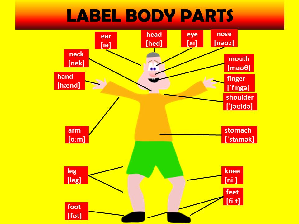 DESCRIBE AND POINT TO BODY PARTS (make the pairs – draw easy figure – point to and say 8 body parts) Make your conversation.