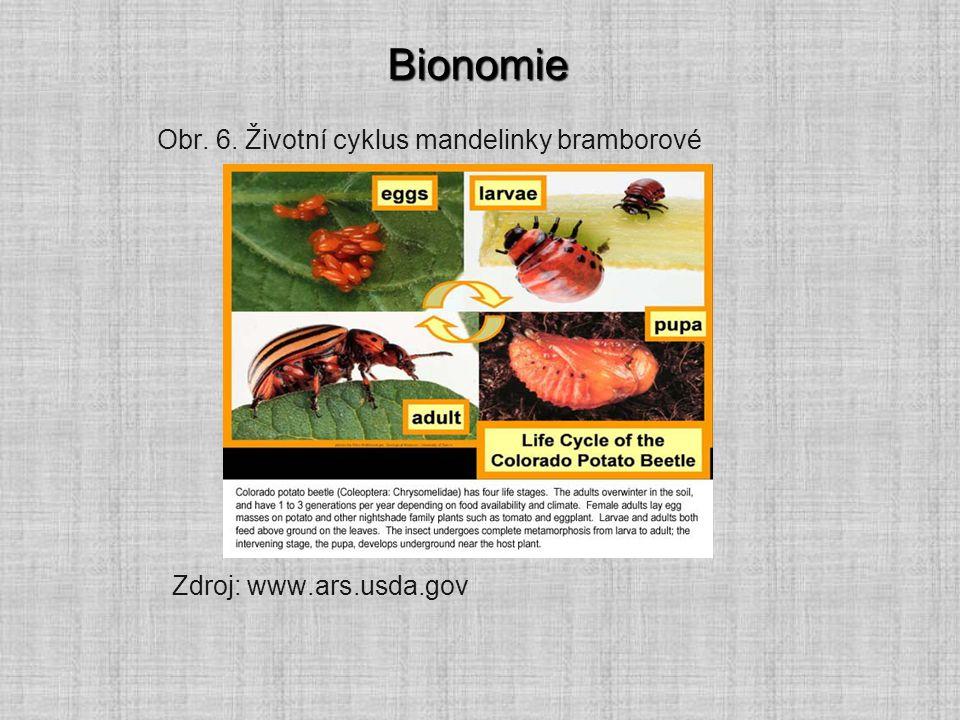 Bionomie Obr. 6. Životní cyklus mandelinky bramborové Zdroj: www.ars.usda.gov