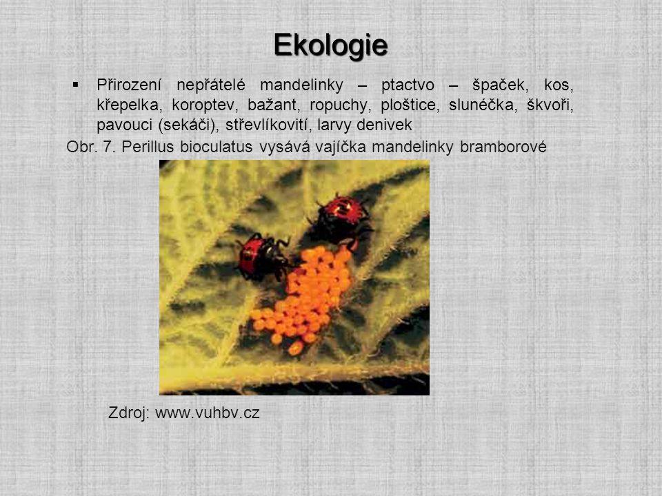 Ekologie  Přirození nepřátelé mandelinky – ptactvo – špaček, kos, křepelka, koroptev, bažant, ropuchy, ploštice, slunéčka, škvoři, pavouci (sekáči),