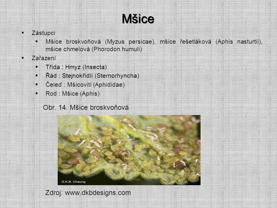 Mšice  Zástupci  Mšice broskvoňová (Myzus persicae), mšice řešetláková (Aphis nasturtii), mšice chmelová (Phorodon humuli)  Zařazení  Třída : Hmyz
