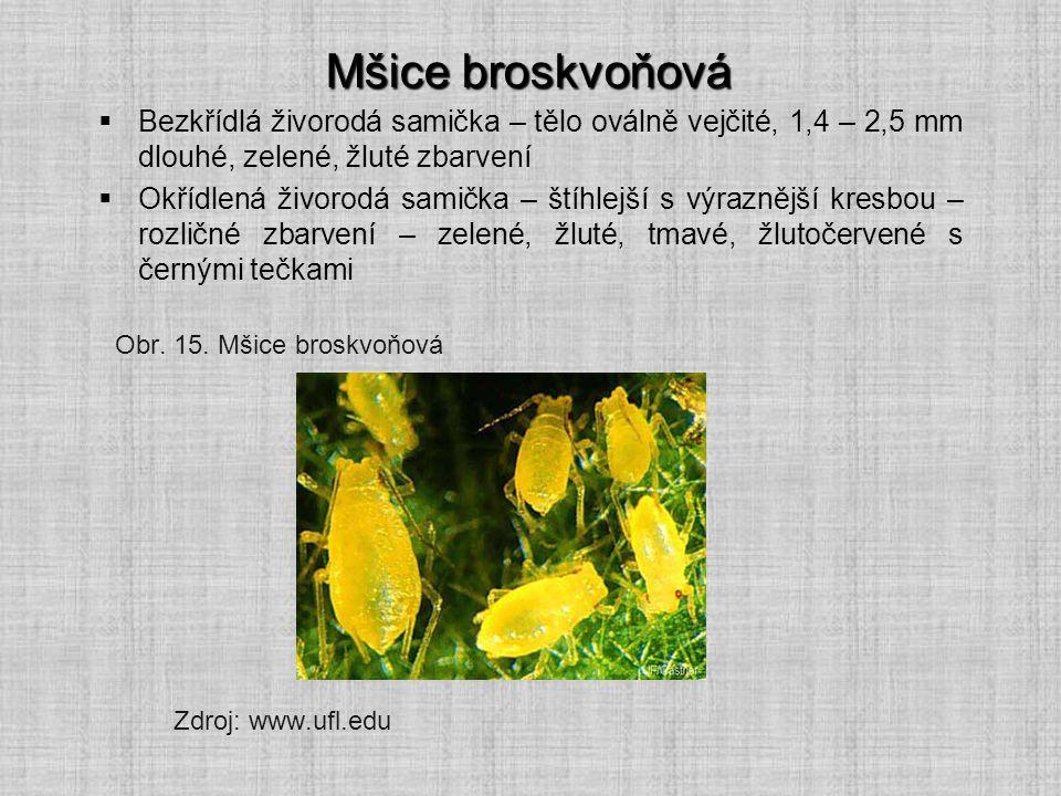Mšice broskvoňová  Bezkřídlá živorodá samička – tělo oválně vejčité, 1,4 – 2,5 mm dlouhé, zelené, žluté zbarvení  Okřídlená živorodá samička – štíhl