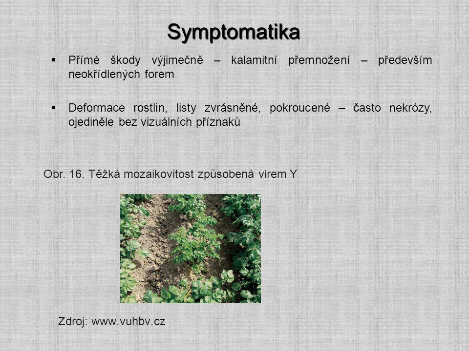 Symptomatika Zdroj: www.vuhbv.cz  Přímé škody výjimečně – kalamitní přemnožení – především neokřídlených forem  Deformace rostlin, listy zvrásněné,