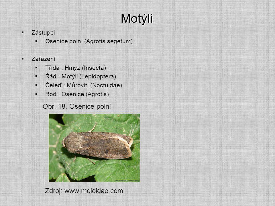 Motýli  Zástupci  Osenice polní (Agrotis segetum)  Zařazení  Třída : Hmyz (Insecta)  Řád : Motýli (Lepidoptera)  Čeleď : Můrovití (Noctuidae) 