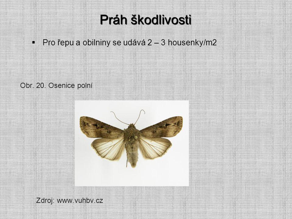 Práh škodlivosti  Pro řepu a obilniny se udává 2 – 3 housenky/m2 Obr. 20. Osenice polní Zdroj: www.vuhbv.cz