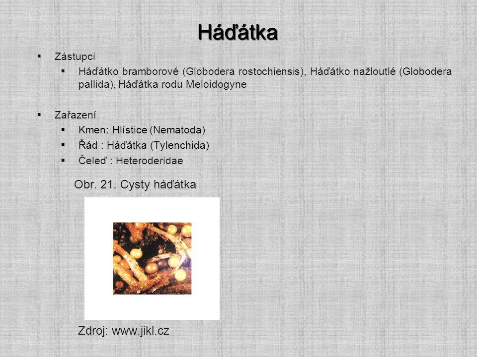 Háďátka  Zástupci  Háďátko bramborové (Globodera rostochiensis), Háďátko nažloutlé (Globodera pallida), Háďátka rodu Meloidogyne  Zařazení  Kmen: