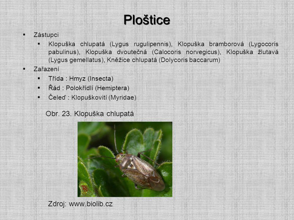 Ploštice  Zástupci  Klopuška chlupatá (Lygus rugulipennis), Klopuška bramborová (Lygocoris pabulinus), Klopuška dvoutečná (Calocoris norvegicus), Klopuška žlutavá (Lygus gemellatus), Kněžice chlupatá (Dolycoris baccarum)  Zařazení  Třída : Hmyz (Insecta)  Řád : Polokřídlí (Hemiptera)  Čeleď : Klopuškovití (Myridae) Zdroj: www.biolib.cz Obr.