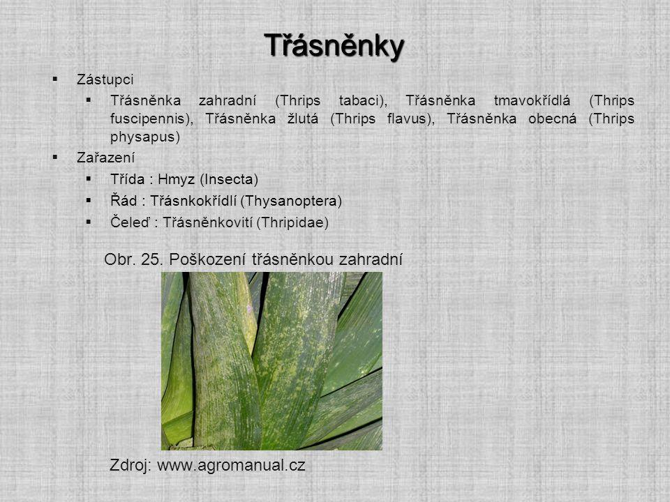Třásněnky  Zástupci  Třásněnka zahradní (Thrips tabaci), Třásněnka tmavokřídlá (Thrips fuscipennis), Třásněnka žlutá (Thrips flavus), Třásněnka obec
