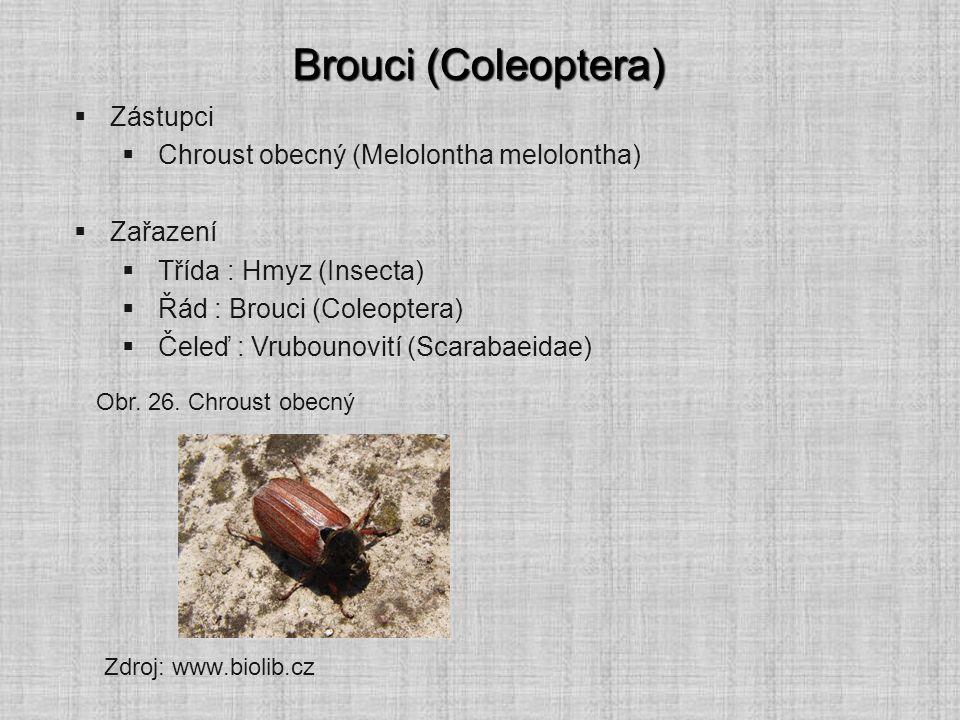 Brouci (Coleoptera)  Zástupci  Chroust obecný (Melolontha melolontha)  Zařazení  Třída : Hmyz (Insecta)  Řád : Brouci (Coleoptera)  Čeleď : Vrub