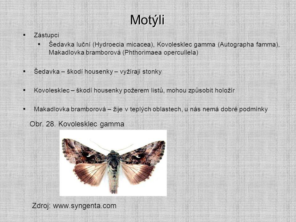 Motýli  Zástupci  Šedavka luční (Hydroecia micacea), Kovolesklec gamma (Autographa famma), Makadlovka bramborová (Phthorimaea opercullela)  Šedavka