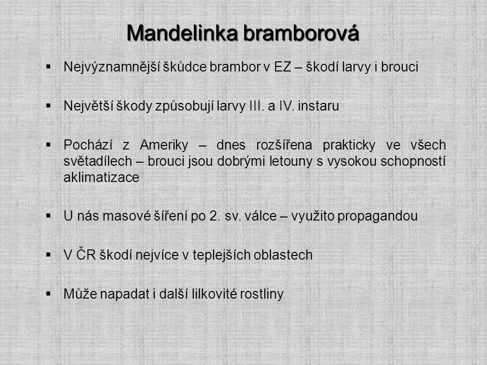 Mandelinka bramborová  Nejvýznamnější škůdce brambor v EZ – škodí larvy i brouci  Největší škody způsobují larvy III. a IV. instaru  Pochází z Amer