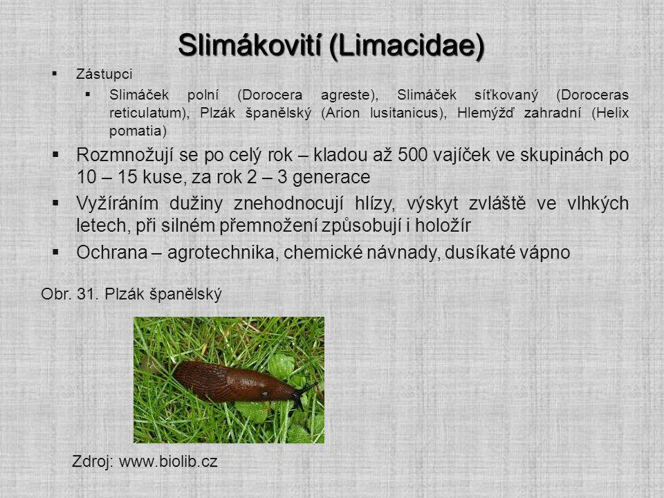 Slimákovití (Limacidae)  Zástupci  Slimáček polní (Dorocera agreste), Slimáček síťkovaný (Doroceras reticulatum), Plzák španělský (Arion lusitanicus