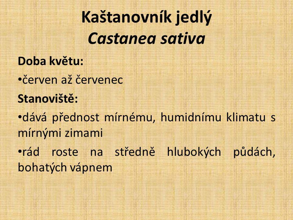 Kaštanovník jedlý Castanea sativa Doba květu: červen až červenec Stanoviště: dává přednost mírnému, humidnímu klimatu s mírnými zimami rád roste na středně hlubokých půdách, bohatých vápnem