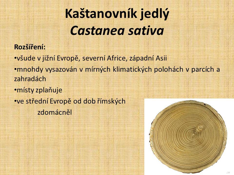 Kaštanovník jedlý Castanea sativa Rozšíření: všude v jižní Evropě, severní Africe, západní Asii mnohdy vysazován v mírných klimatických polohách v parcích a zahradách místy zplaňuje ve střední Evropě od dob římských zdomácněl