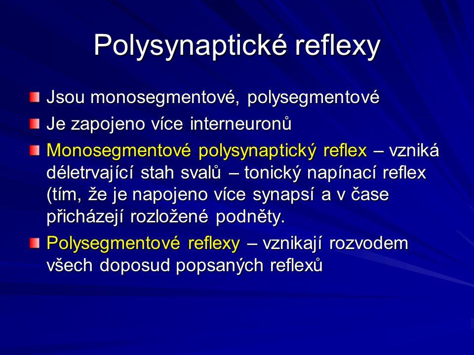 Polysynaptické reflexy Jsou monosegmentové, polysegmentové Je zapojeno více interneuronů Monosegmentové polysynaptický reflex – vzniká déletrvající stah svalů – tonický napínací reflex (tím, že je napojeno více synapsí a v čase přicházejí rozložené podněty.